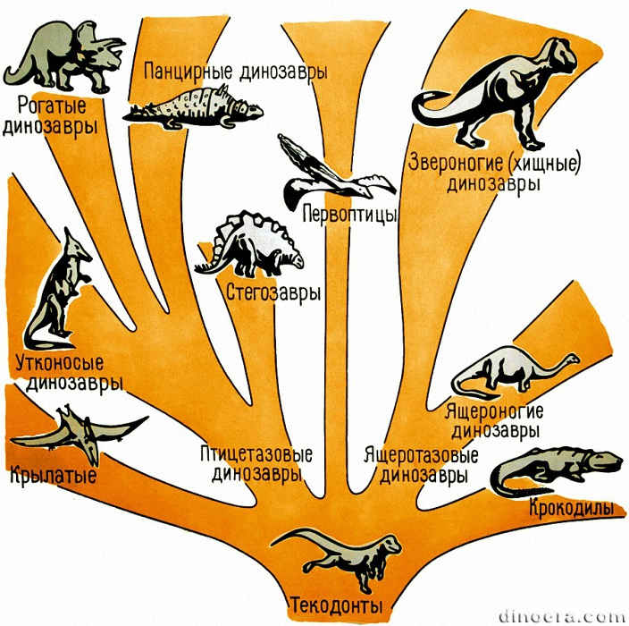 Adaptive radiation 01 cc