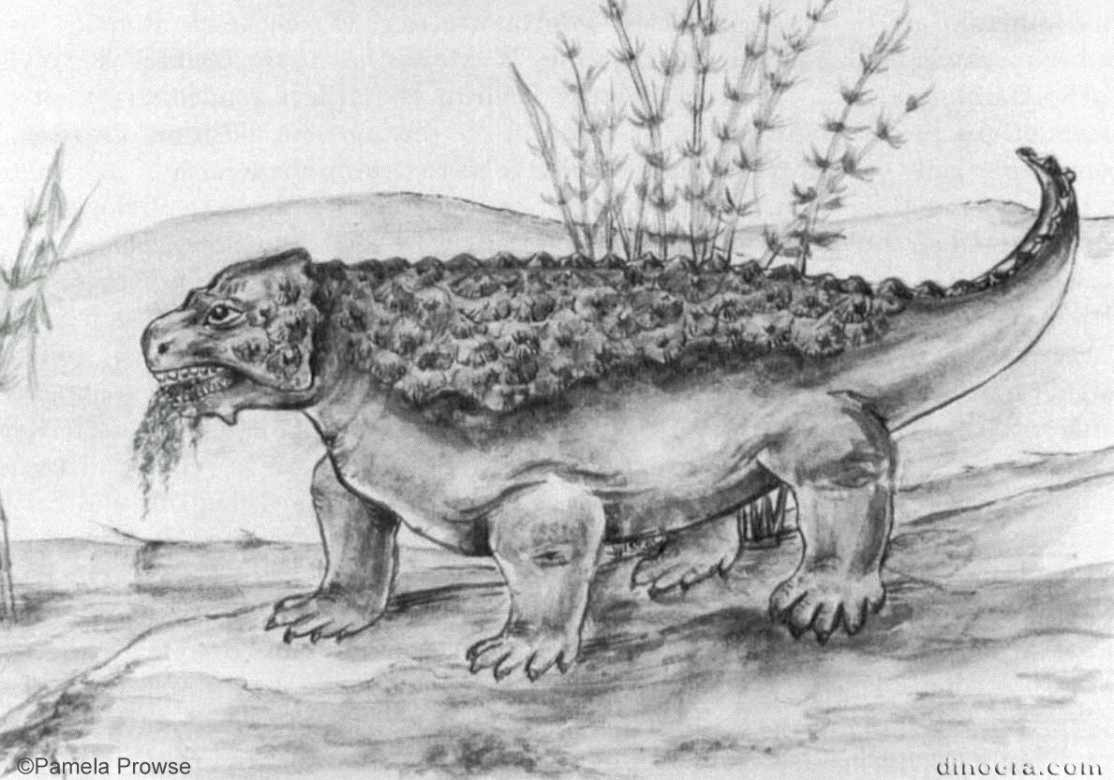 Anthodon serrarius