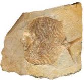 Что изучает Палеонтология