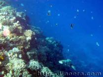 Reef Modern