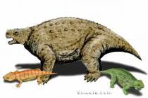 Procolophonomorpha