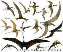 Многообразие птерозавров