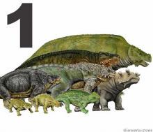 Pareiasauriformes